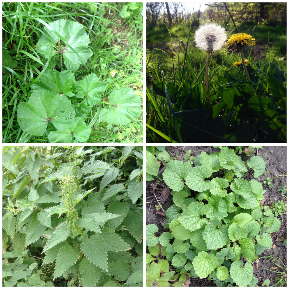 Spring Foraging in London