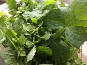 Wild salad leaves